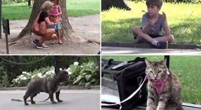 Egy elhagyott fiú gyermekre annyira sem figyelünk, mint egy kóbor kutyára? – Szociológiai kísérlet