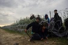 Sáskajárás a déli végeken: helyzetjelentés a Betyársereg röszkei tagjától
