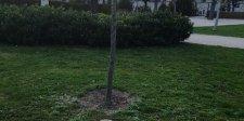 Orbán fája – lelepleztük Simicska újabb hazugságát! (fotóval)
