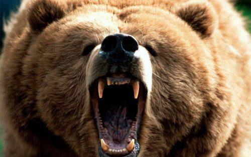 Medve támadt egy 27 éves fiatalemberre Tusnádfürdőn