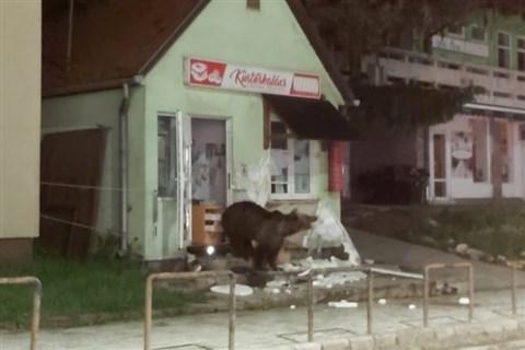 Medvetámadások esetén azonnali beavatkozást lehetővé tevő szabályozást készítenek Bukarestben