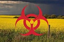 A Monsanto és a Bayer GM növényei a tiltás ellenére is megfertőzik az európai földeket (Videókkal)