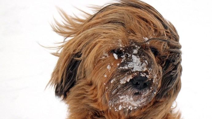 100 km/óránál erősebb volt a szél, visszatér a havazás