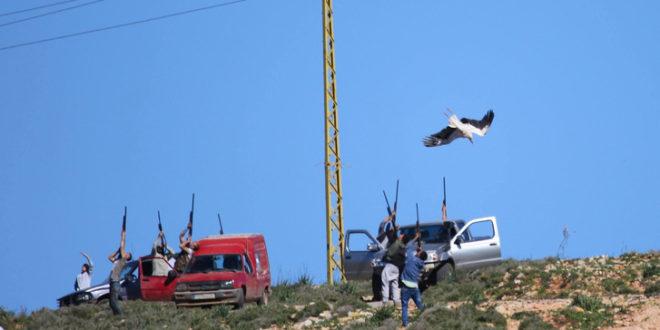 Tömegesen mészárolják a gólyákat Libanon felett