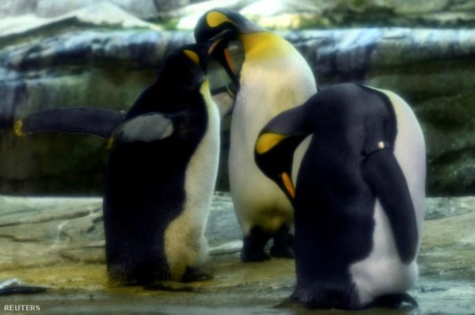 A homokos pingvin mindent visz