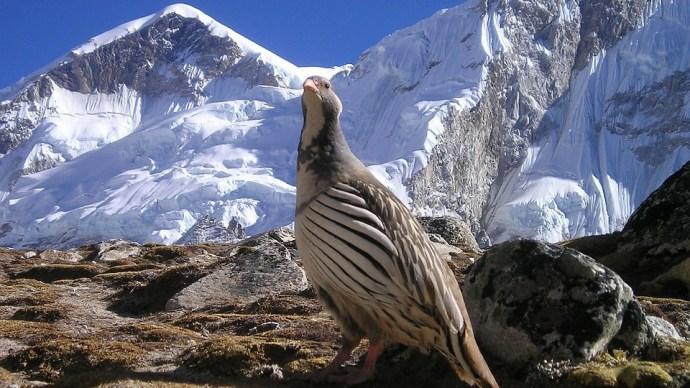"""Már idén sem """"szűz"""" a Föld második legmagasabb hegycsúcsa"""