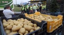 Tíz évünk maradt, utána eltűnhet a krumpli a magyar földből