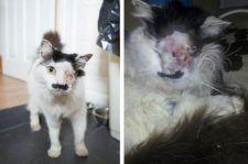Megkínoztak egy macskát, mert hasonlított a Führerre