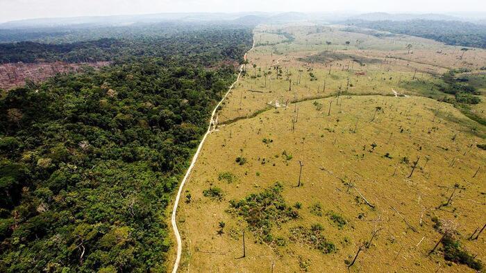 Az Amazonas legkiterjedtebb erdőirtáson átesett térségeiben nőnek legkevésbé új erdők