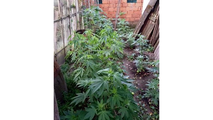 2 kg marihuánát foglaltak le egy házkutatás során Huszton