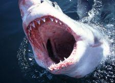 Mentőakció közben ölte meg a cápa a hajótöröttet