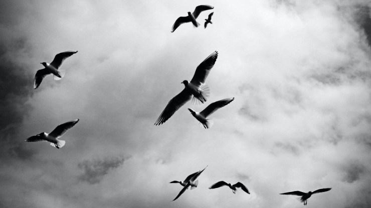 Ijesztő méreteket öltött a turai madármérgezés