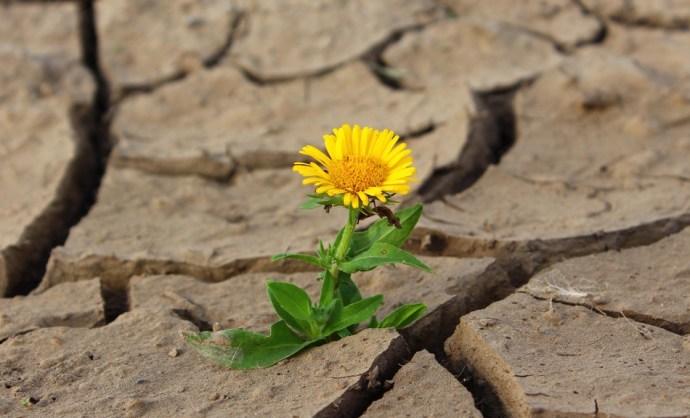 Hazánkat is veszélyezteti a sivatagosodás – komolyan veszi a kormány?