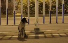 VIDEÓ: 80 napja várja halott gazdáját egy kutya az út szélén