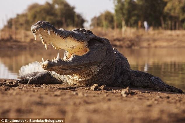Egy zimbabwei szektavezér meg akarta mutatni, hogy ő is tud vízen járni – de a krokodilokat nem érdekelte a mutatvány