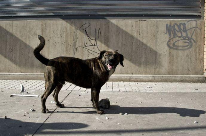 Elaltattak 16 ezer kóbor kutyát