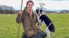 Egy angliai border collie lett a világ legdrágább pásztorkutyája