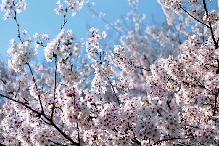 Meteorológiai szolgálat: csaknem 2 fokkal hűvösebb volt a tavasz a szokásosnál