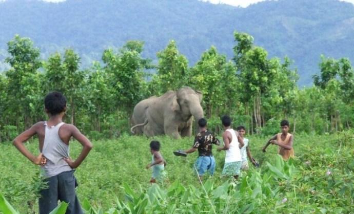 Megölték a 15 ember életét kioltó elefántot Indiában