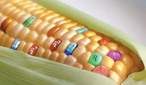 Kína nemet mondott a GMO-ra
