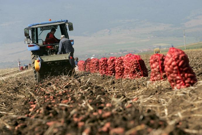 30-40 százalékkal csökkent az idei burgonyatermés Hargita megyében