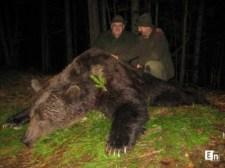 Medveuralom a Kárpátokban