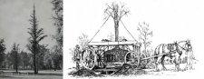 Már kialakításakor fontos szerepe volt a faátültetésnek a Városligetben