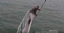 VIDEÓ: Így ugrik ki egy fehér cápa a vízből, hogy elkapja a tengerbiológust