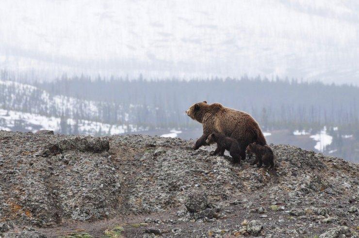 Biden elfüggeszti az alaszkai vadon területére kiadott olajkutatási engedélyeket