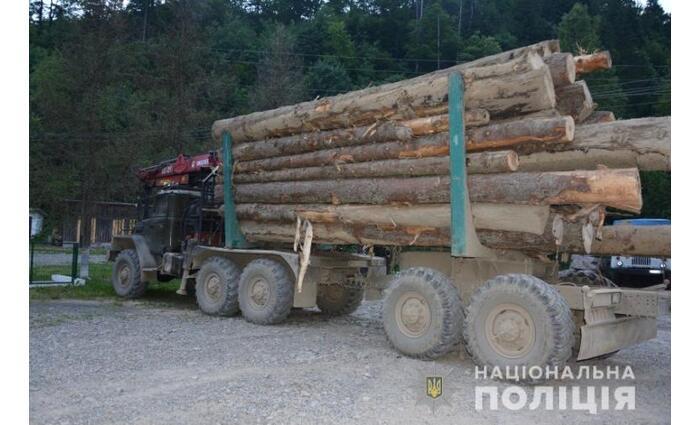 Illegálisan vágtak ki egy teherautónyi fenyőt Kárpátalján