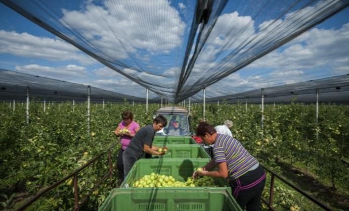 A Jobbik 30 millió ember élelmezésére készül