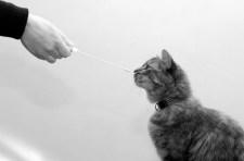 Miért szeretik a tudósok a kutyákat, és miért utálják a macskákat?