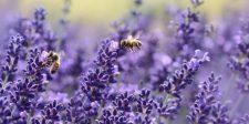 Íme 10 növény, amit nem bírnak a szúnyogok