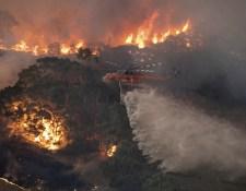 Az ausztrálok fele adományozott a bozóttűz legyőzésére