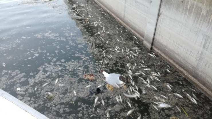 Tömeges halpusztulást érzékelnek a Velencei-tavon