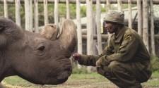 Elpusztult a világ utolsó fehér hím rinocérosza