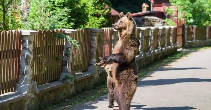 A medvék számát kell szabályozni, nem az önkormányzatokat büntetni