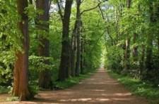 Új tulajdonosa van a Zirci Arborétumnak