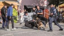 Rendőrkutyák tepertek földre egy embert a belvárosban