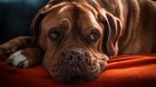 Mit tegyünk, ha fél a kutya a petárdáktól?
