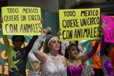 Betiltják az állatprodukciókat a fővárosi cirkuszokban
