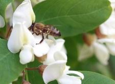 Most éppen a magyar méhészeket akarja tönkretenni az EU