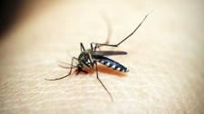 Szúnyogkatasztrófa fenyeget: teljes és gyors módszerváltás kell