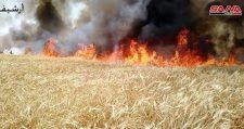 ,Ismeretlenek,, újabb 10 000 hektár termőföldet gyújtottak fel Szíriában