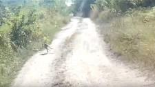 Egy kenguru bukkant fel Tata szomszédságában – videó