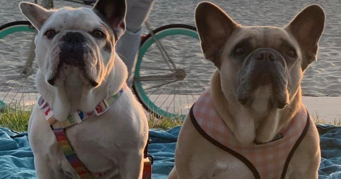Előkerültek Lady Gaga elrabolt kutyái