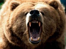 Támadnak az álmatlan medvék