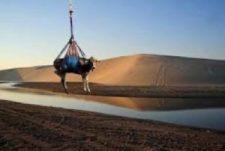 Miért nevel Katar teheneket a sivatagban?