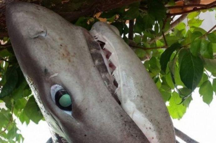 Montenegróban élőben játszódott Az öreg halász és a tenger