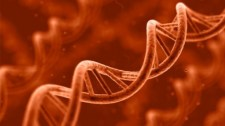 """Kutatók mondták ki, amit a """"rasszisták"""" már régóta tudnak: a gének felelősek a tanulásbeli különbségekért"""